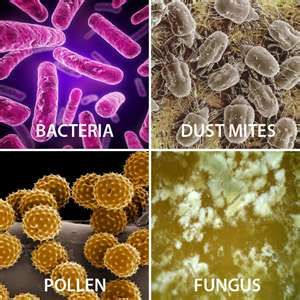 bacteria-mold spores-dust mites-fungus